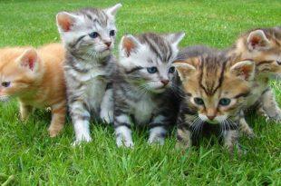 national kitten day world саt day national саt day 2015 international саt day 2016 world саt day 2016 national kitten day 2016 national саt day uk national саt day 2017